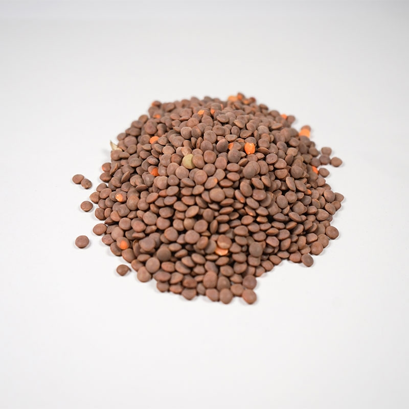 茶レンズ豆
